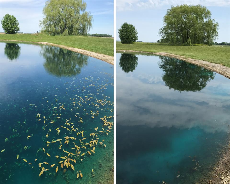 Before and After Surface Weeds
