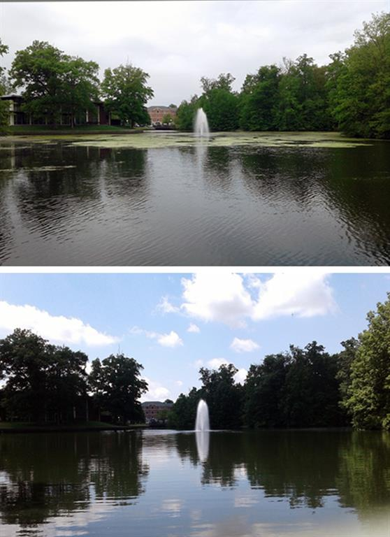 Before and After Pond Algae