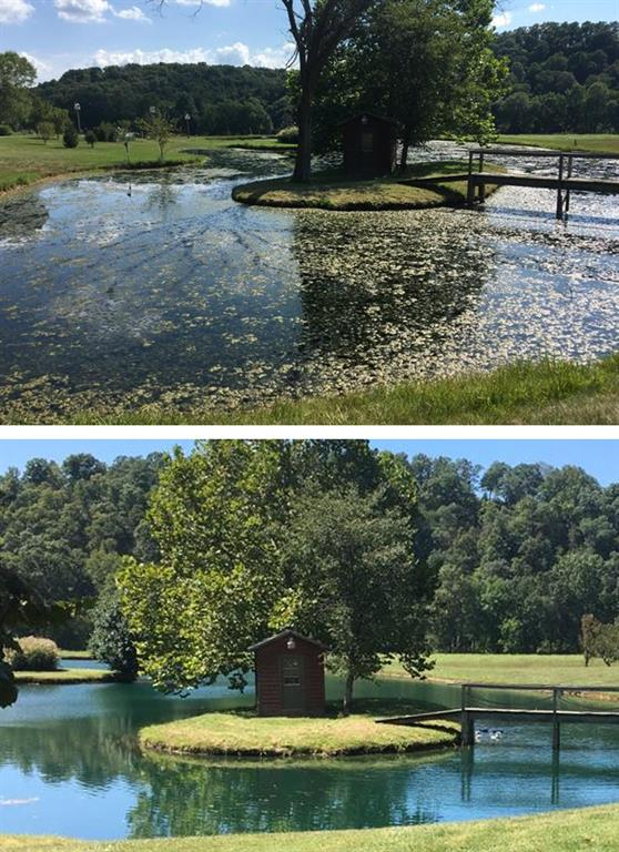 Before and After Pond Transformation
