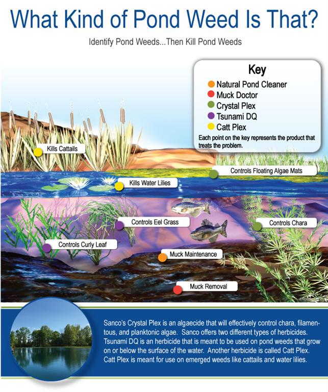 ID Your Pond Weed Infographic