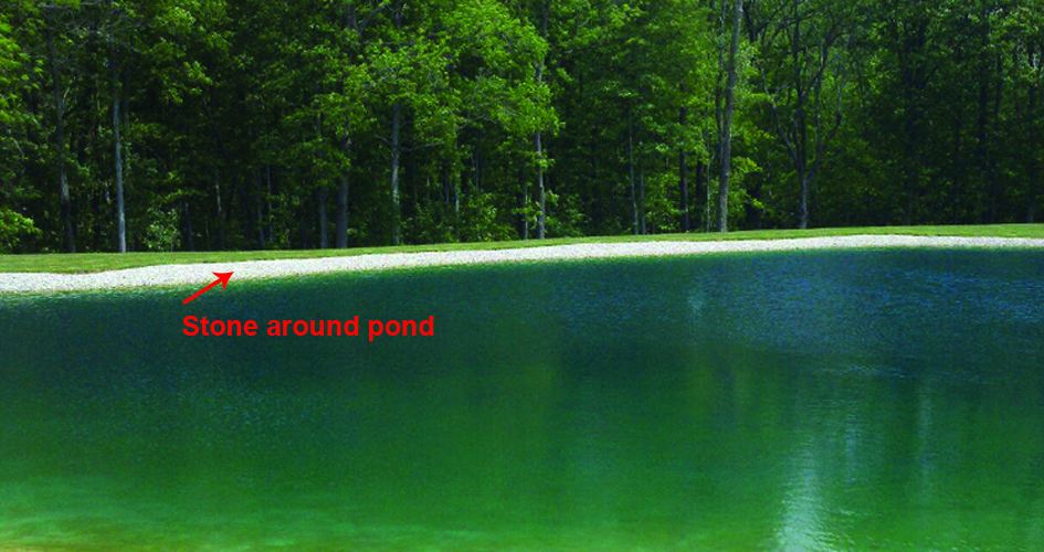 Causes Of Murky Pond Water Sanco Industries