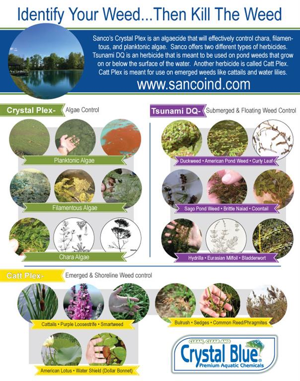 Identify Your Pond Weeds