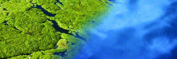 Killing Pond Algae | Sanco Industries